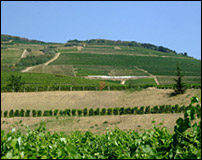 A Tokaji Vineyard